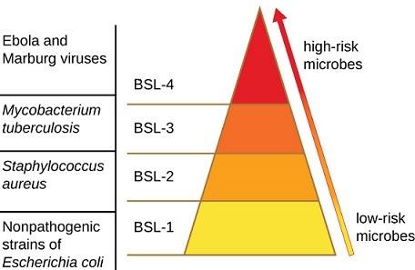 Phân loại 4 mức độ an toàn sinh học